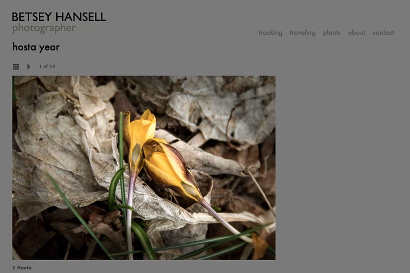 web design for a photographer - portfolio single page - hosta year