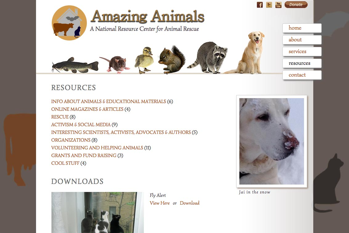 web design for a non-profit organization - Amazing Animals - resources page