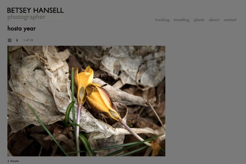 web design for a photographer - Betsey Hansell - single artwork from hosta year portfolio