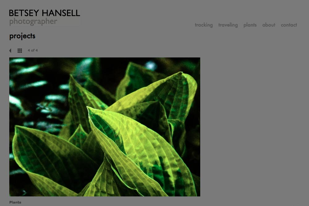 web design for a photographer - Betsey Hansell - single artwork page from hosta project